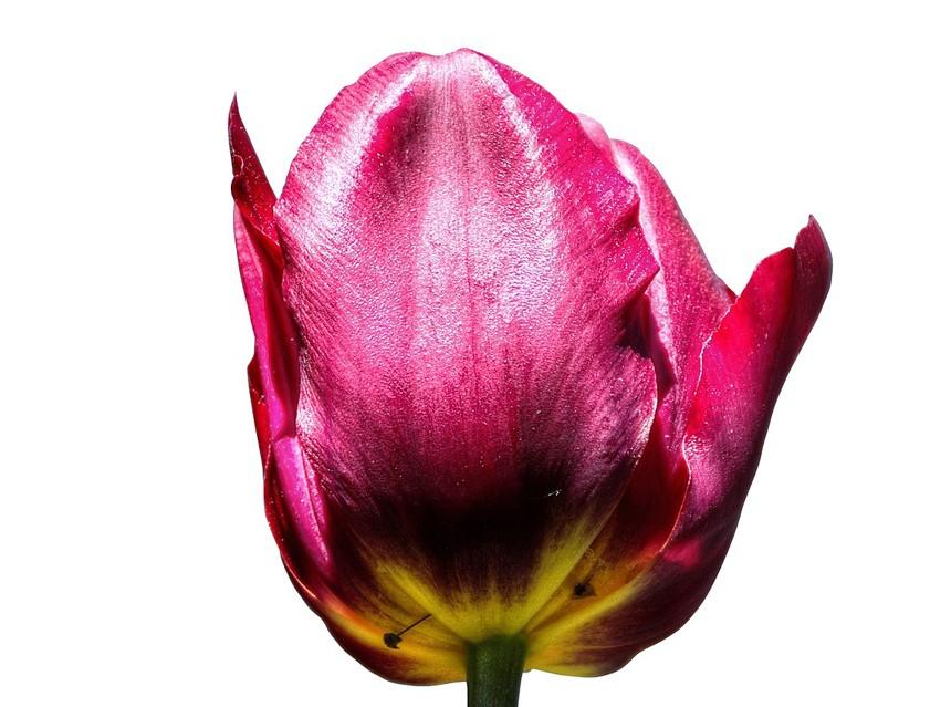 תמונת רקע של פרח